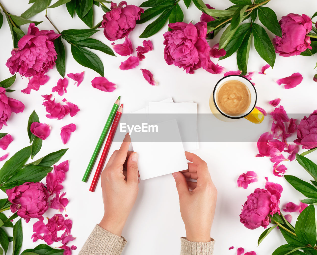 one person, flower, human body part, real people, plant, flowering plant, indoors, freshness, nature, high angle view, personal perspective, directly above, human hand, creativity, beauty in nature, women, pink color, holding, petal, hand, finger, flower head