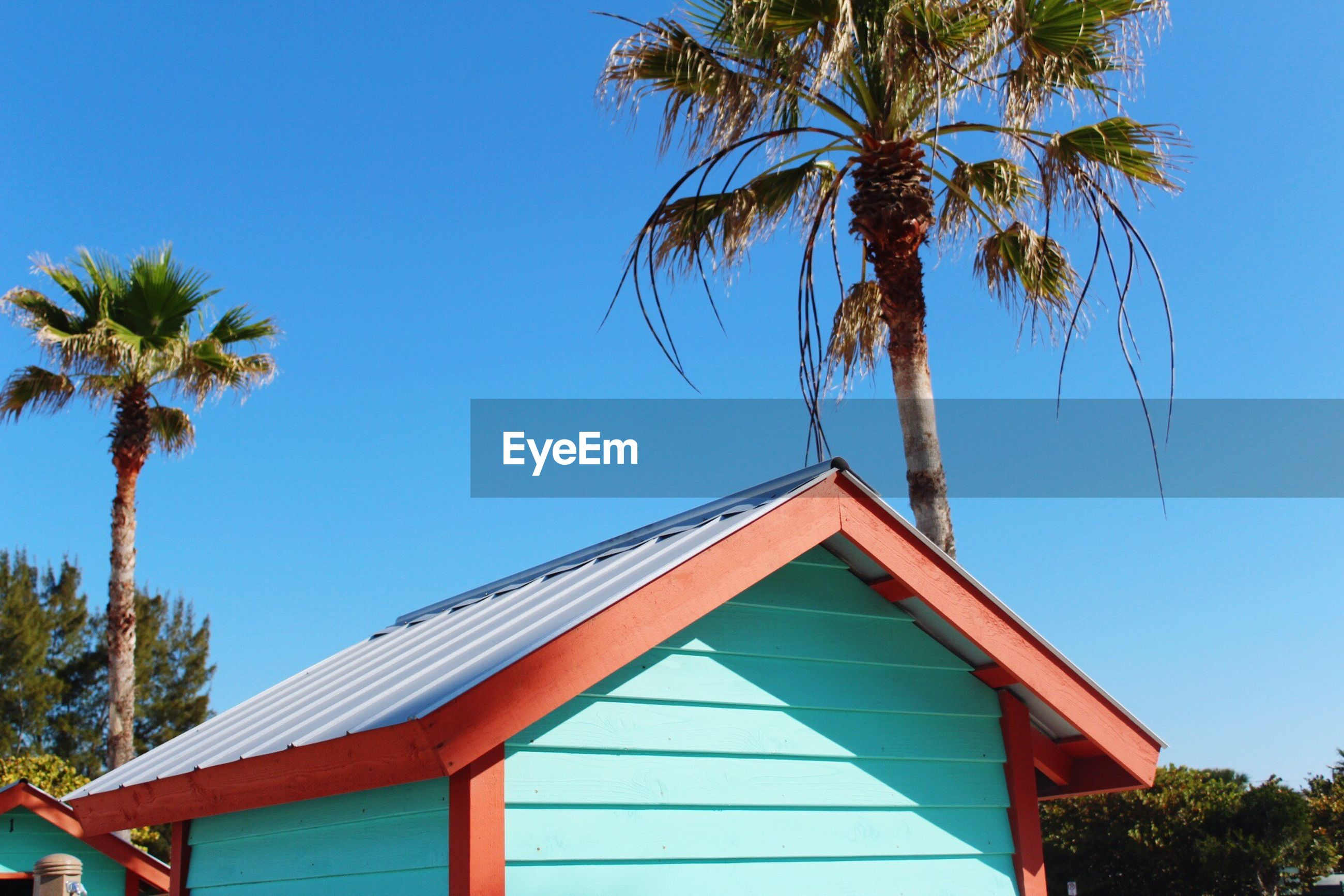 tree, blue, palm tree, building exterior, low angle view, built structure, architecture, clear sky, sunlight, day, no people, outdoors, house, growth, sky, nature