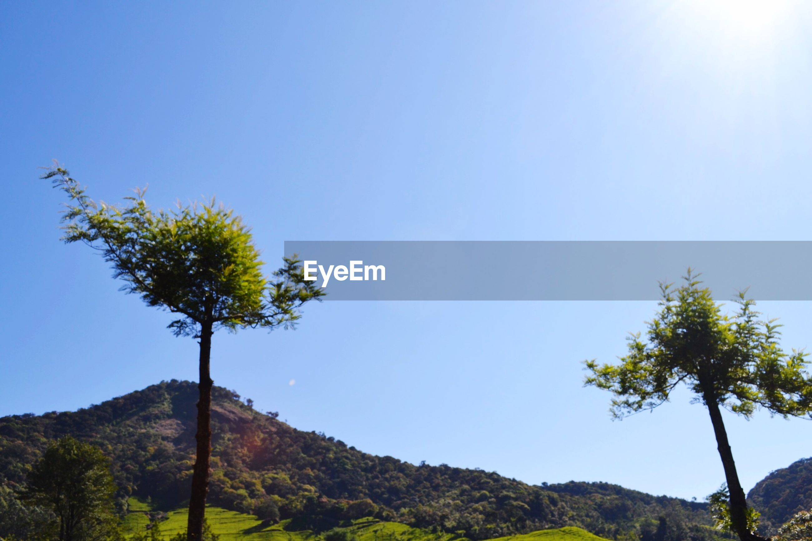 Low angle view of tree and mountain against clear blue sky