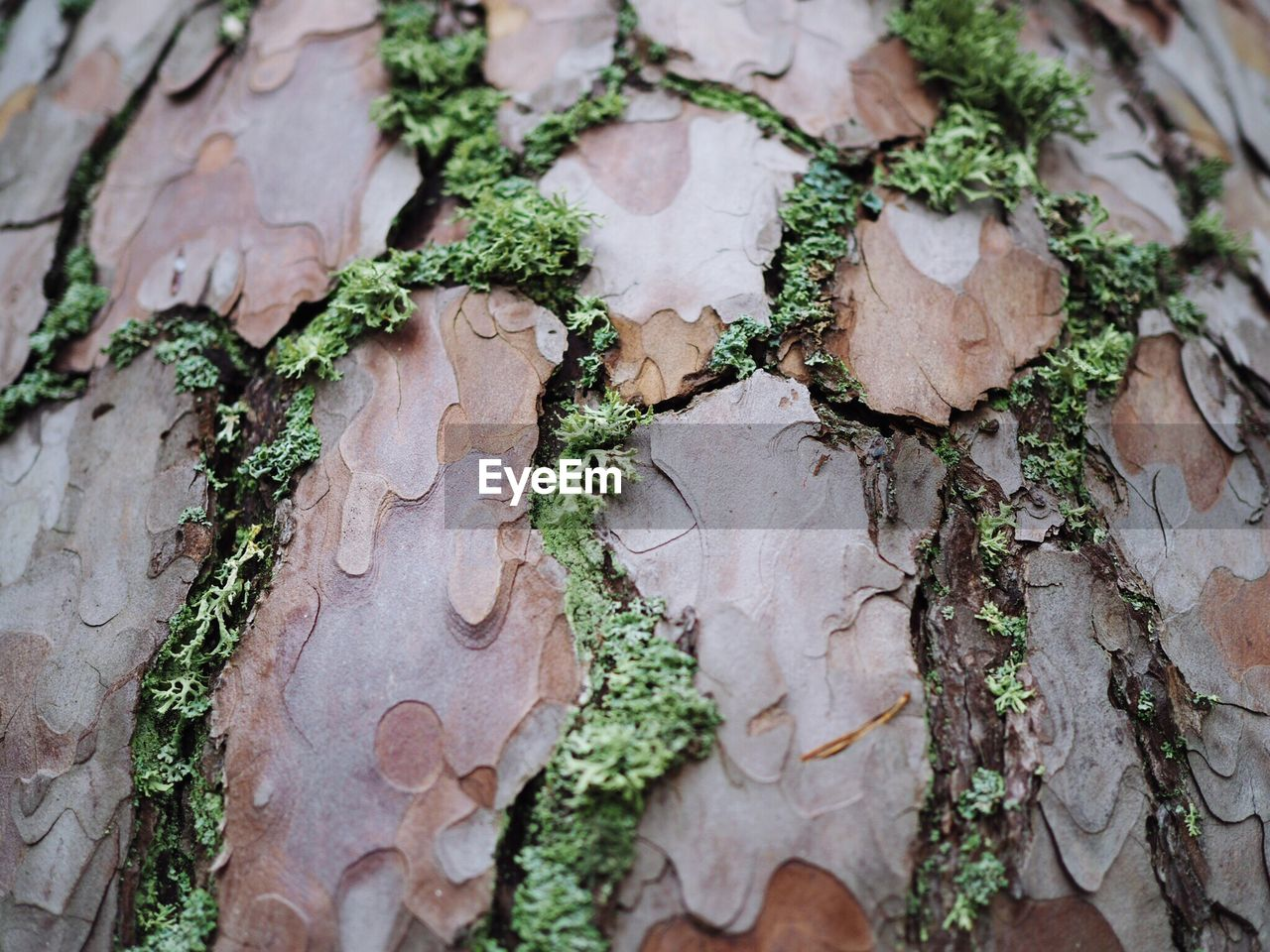 tree trunk, close-up, no people, textured, day, growth, outdoors, tree, full frame, cracked, moss, nature, fungus, backgrounds, bark, lichen, fragility, toadstool