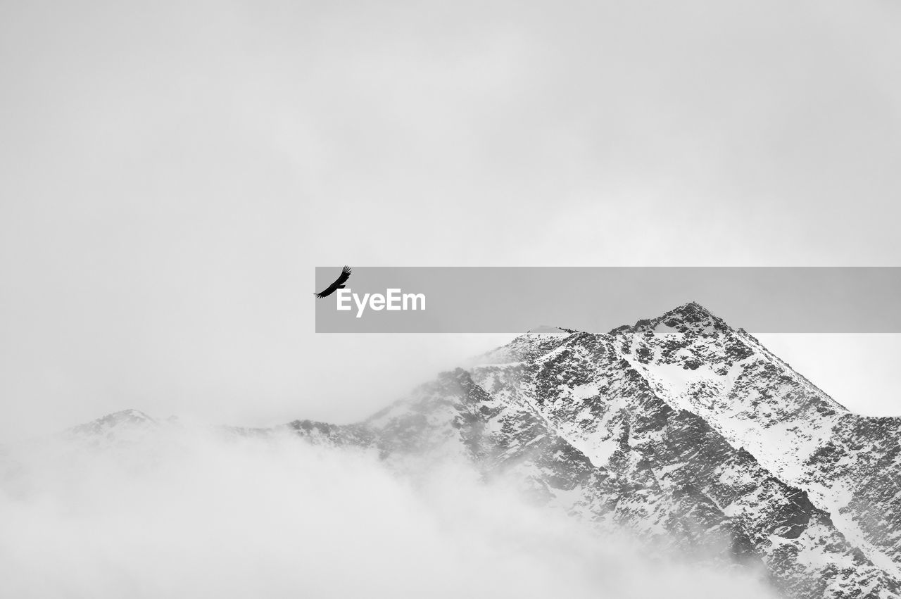 flying, sky, bird, animal themes, mid-air, animal, vertebrate, animals in the wild, mountain, low angle view, animal wildlife, beauty in nature, one animal, nature, day, scenics - nature, spread wings, fog, cloud - sky, no people, snowcapped mountain