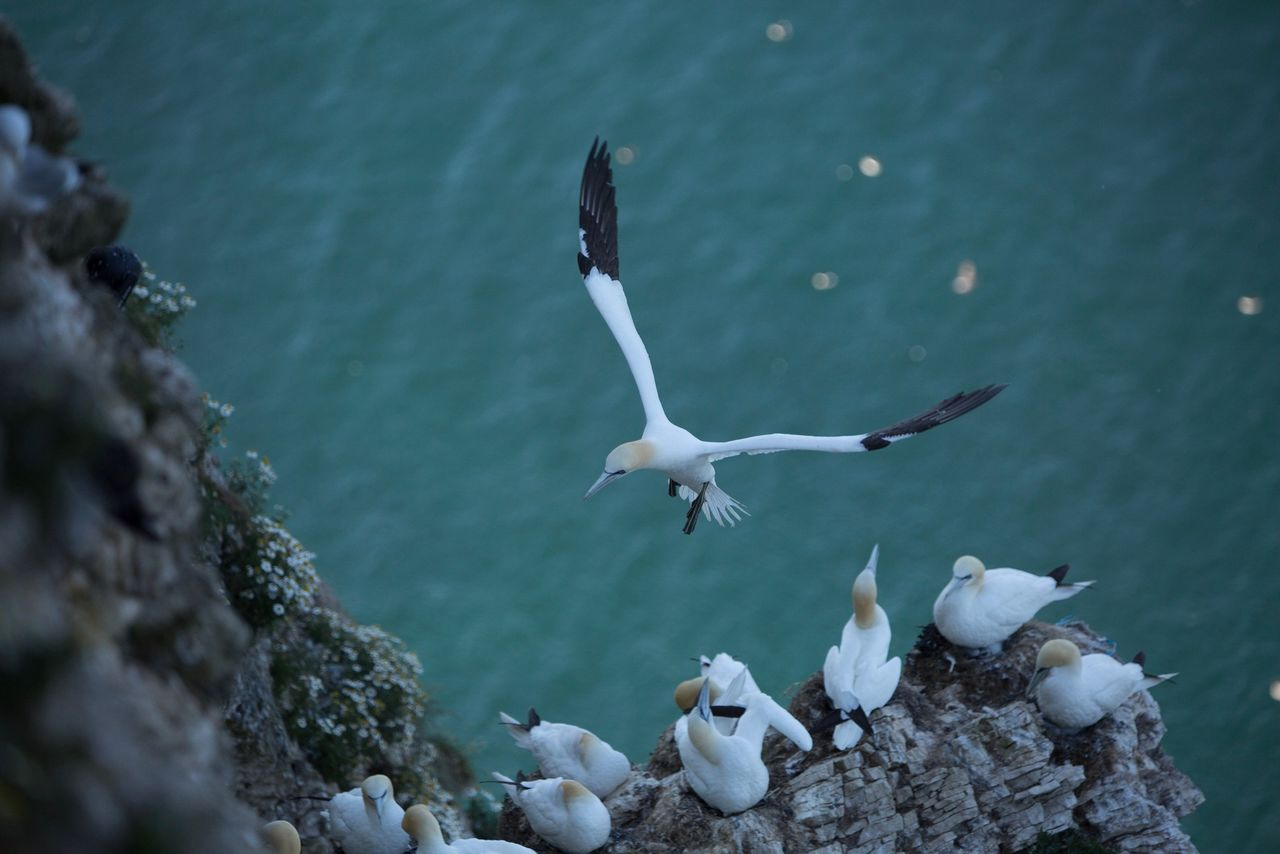animals in the wild, animal wildlife, animal themes, bird, animal, group of animals, vertebrate, water, flying, nature, no people, large group of animals, day, high angle view, sea, white color, spread wings, seagull, rock, flock of birds, marine