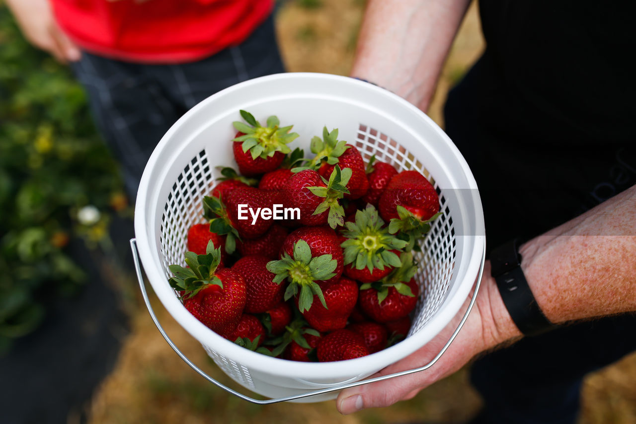 Midsection of man holding strawberries in bucket while standing at farm