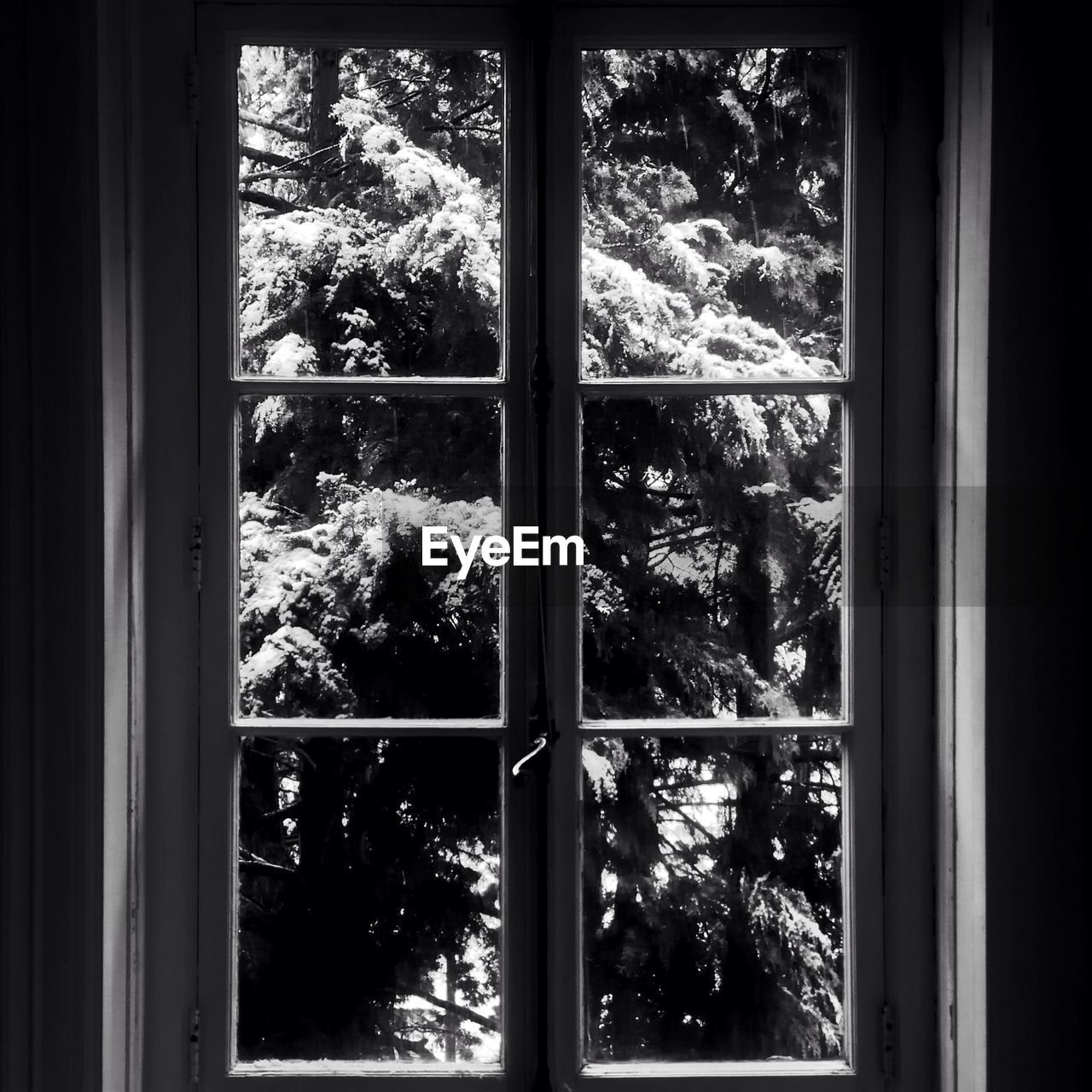window, tree, indoors, no people, day, winter, looking through window, nature, snow, cold temperature, close-up, sky