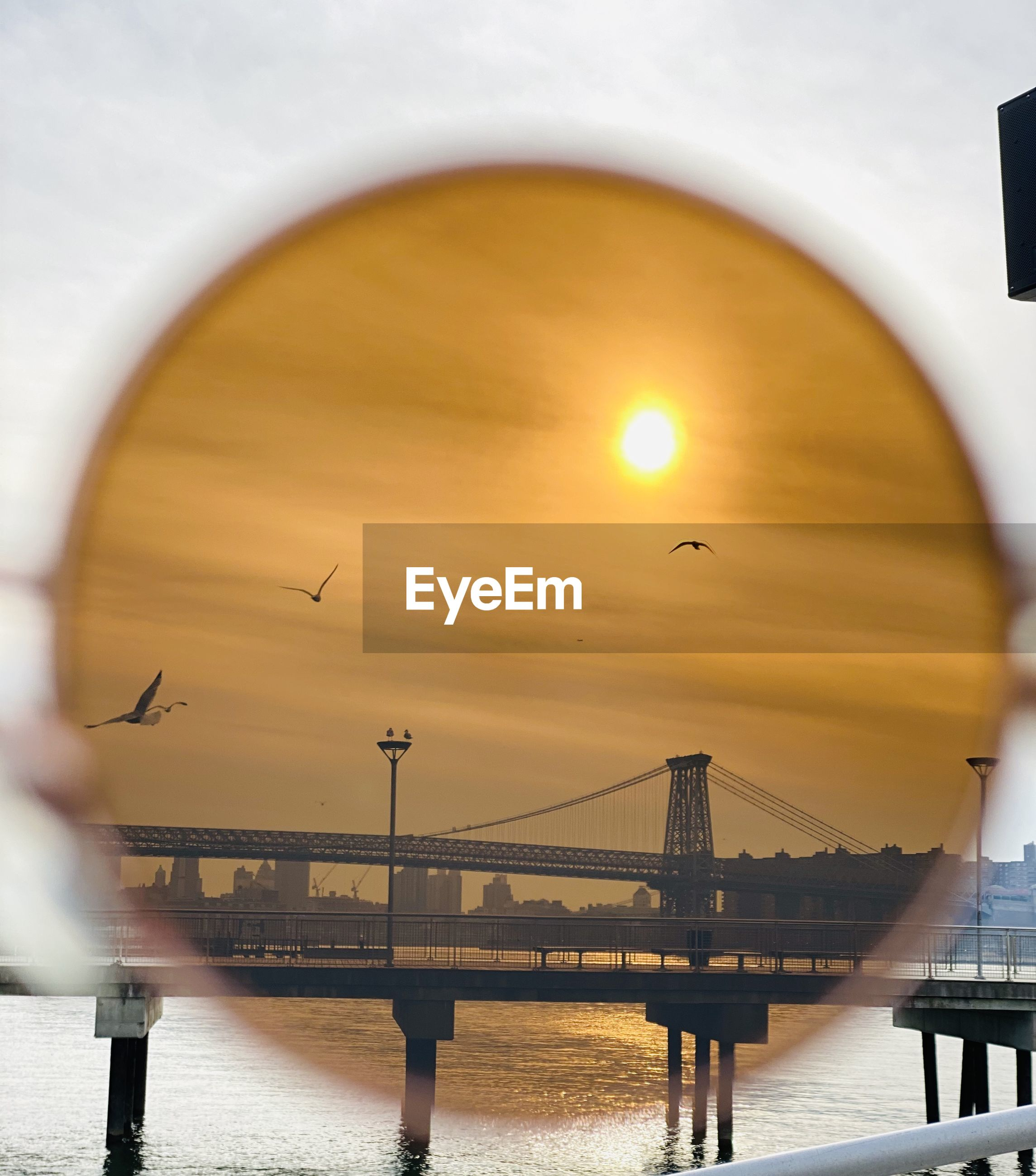 Birds flying over bridge and sea during sunset seen through sunglasses