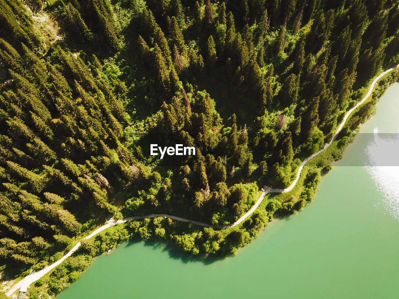 HIGH ANGLE VIEW OF TREES BY CALM LAKE
