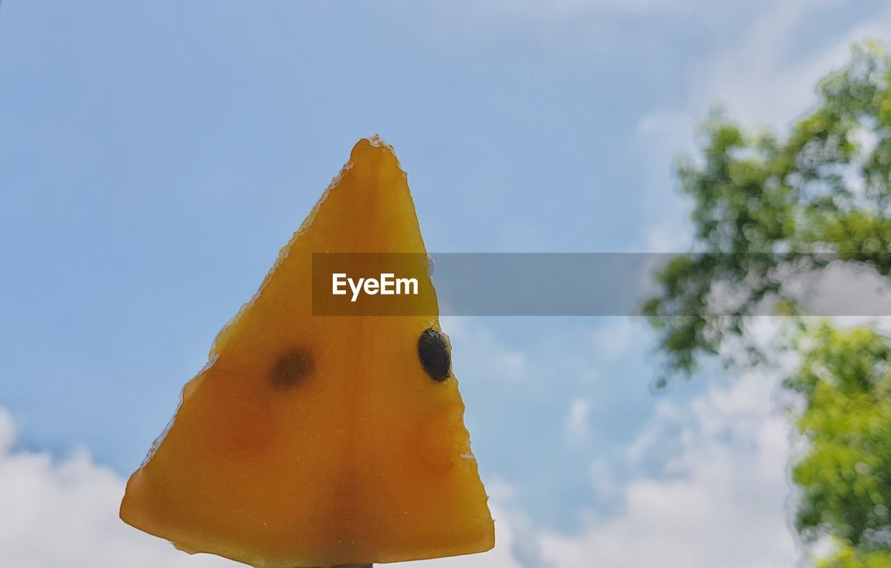 yellow, sky, close-up, no people, day, focus on foreground, nature, cloud - sky, animal themes, animal, representation, animal representation, low angle view, plant, outdoors, animal wildlife, tree, food and drink, food, creativity