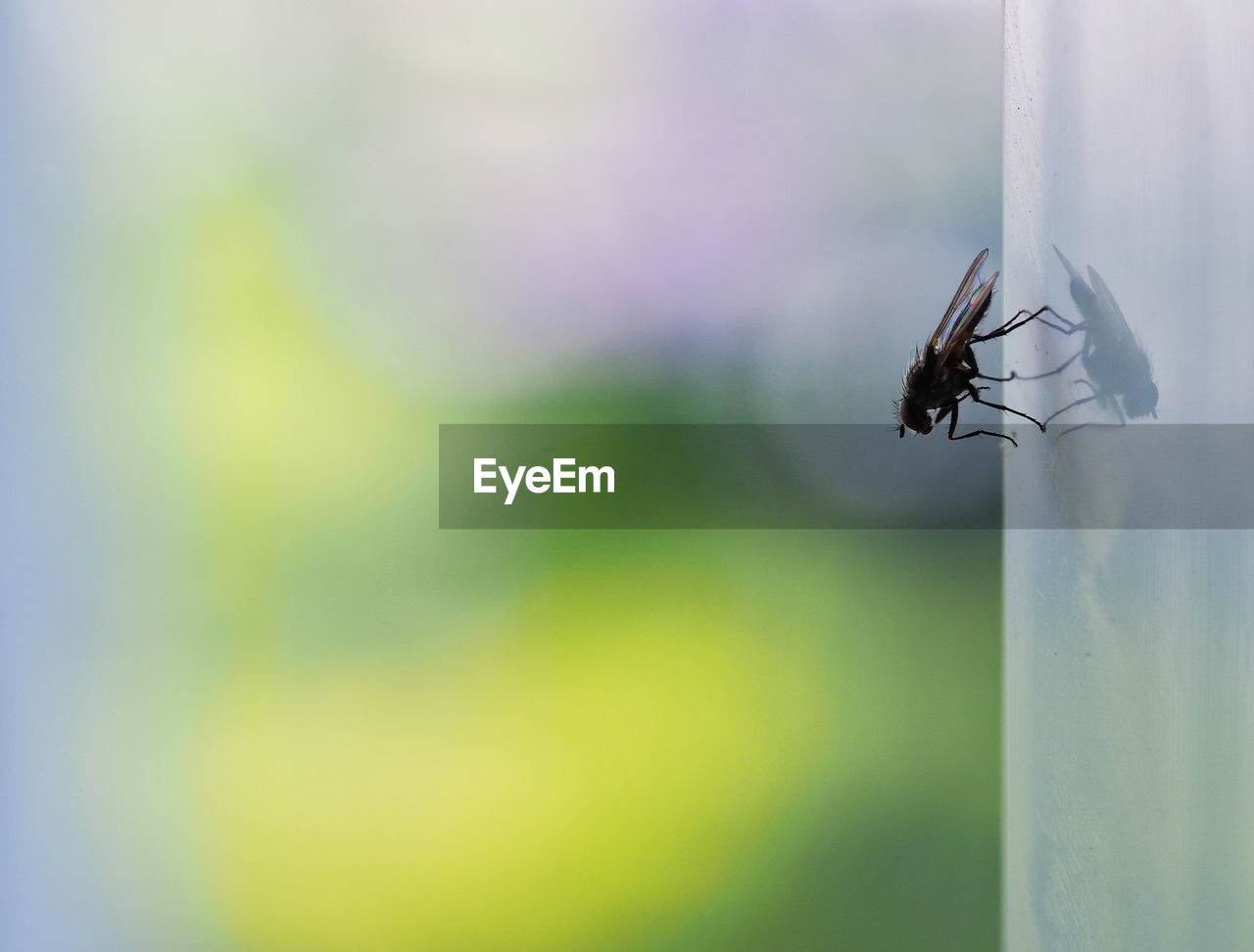 Close-up of fly on window