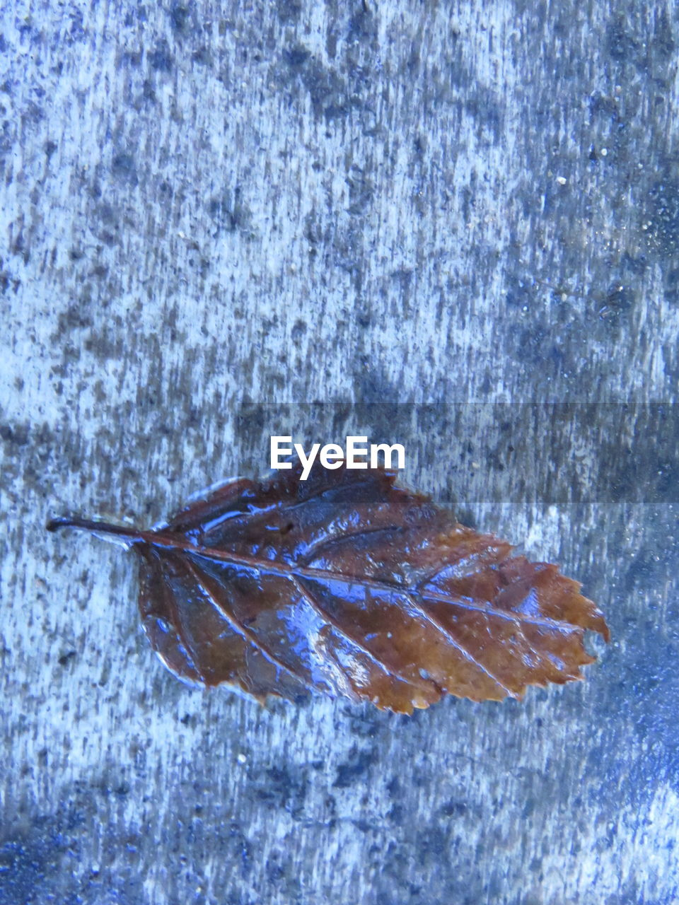 Directly above shot of fallen leaf on wet wood
