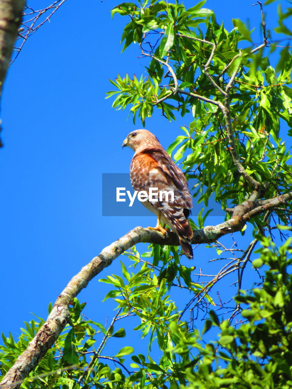 bird, animal themes, plant, vertebrate, animal, one animal, tree, animals in the wild, animal wildlife, perching, low angle view, branch, nature, clear sky, day, blue, no people, leaf, sky, growth, outdoors