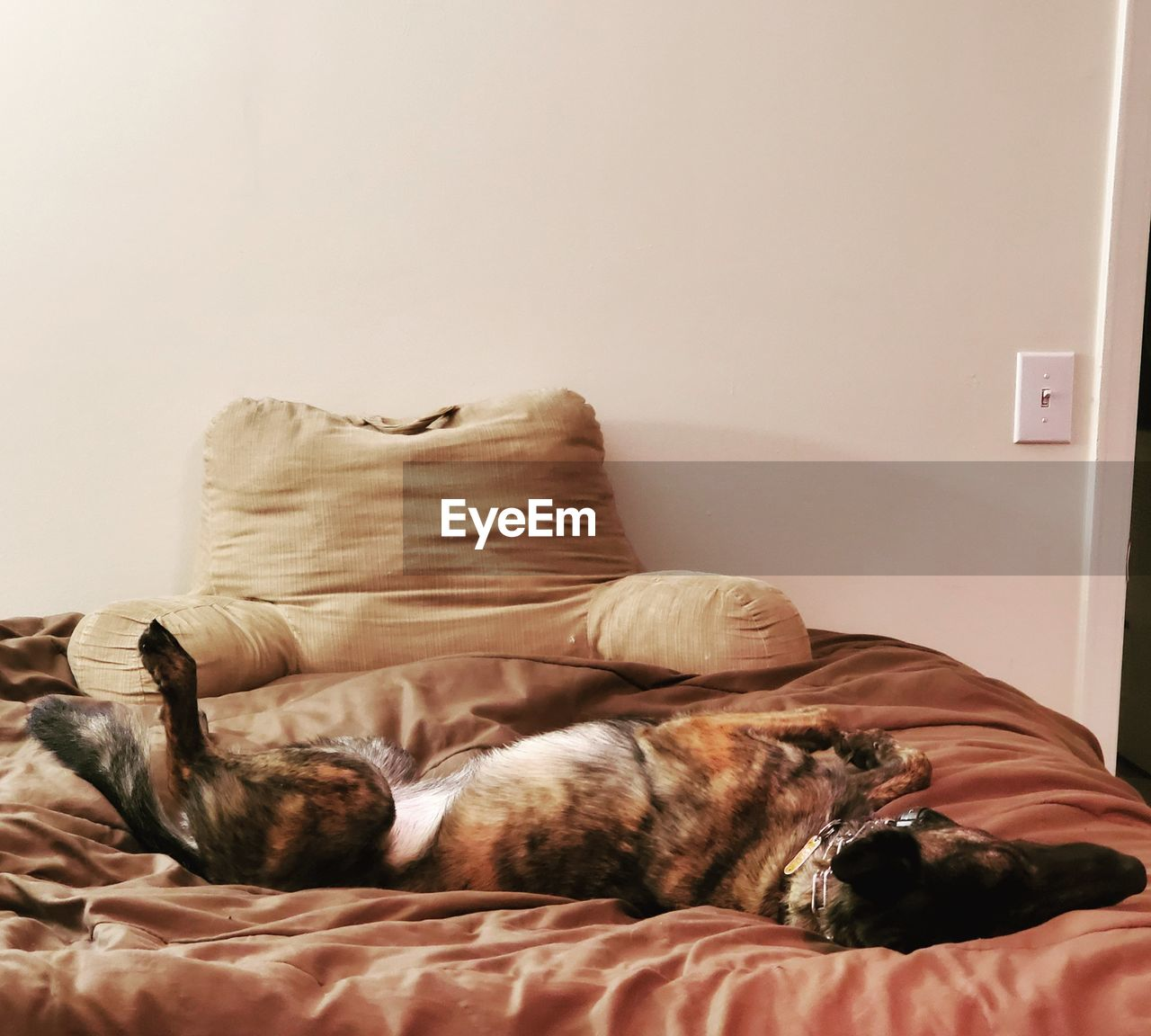 VIEW OF DOG SLEEPING ON BED