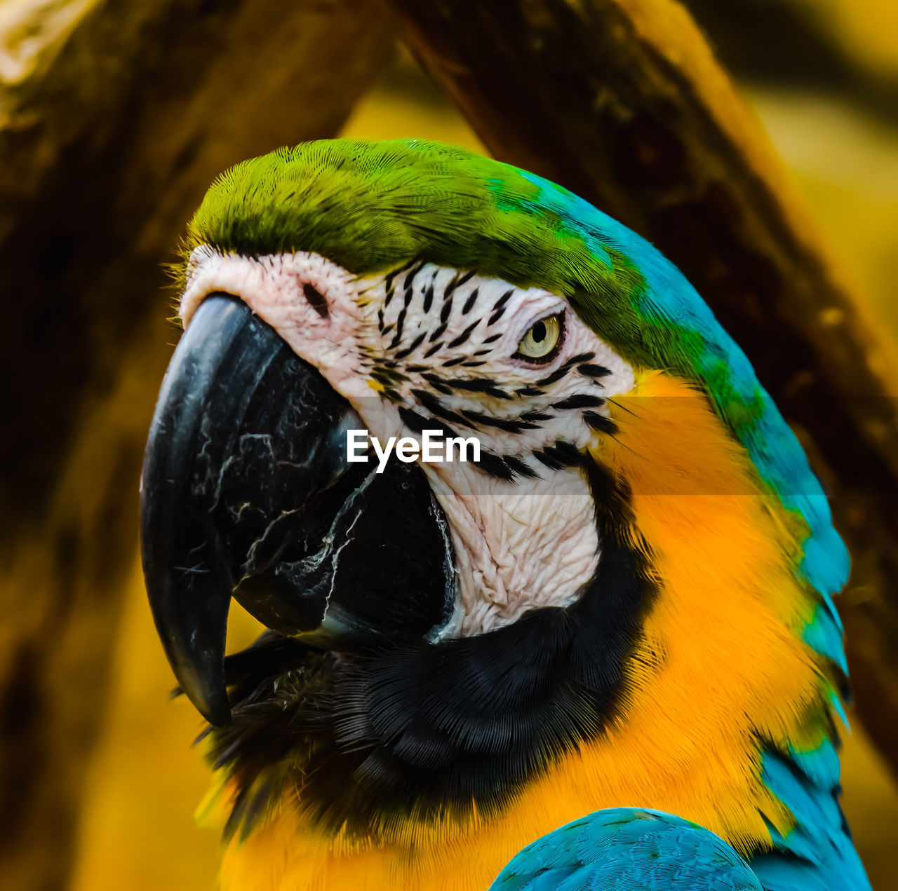 animal, animal themes, animal wildlife, vertebrate, bird, animals in the wild, one animal, parrot, macaw, focus on foreground, close-up, gold and blue macaw, multi colored, no people, beak, nature, day, animal body part, beauty in nature, outdoors, animal head, animal eye