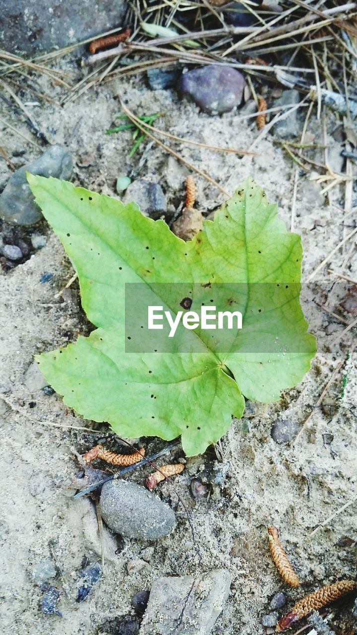 leaf, nature, high angle view, one animal, animal themes, no people, green color, day, outdoors, growth, close-up, plant, animals in the wild, insect, animal wildlife, beauty in nature, water