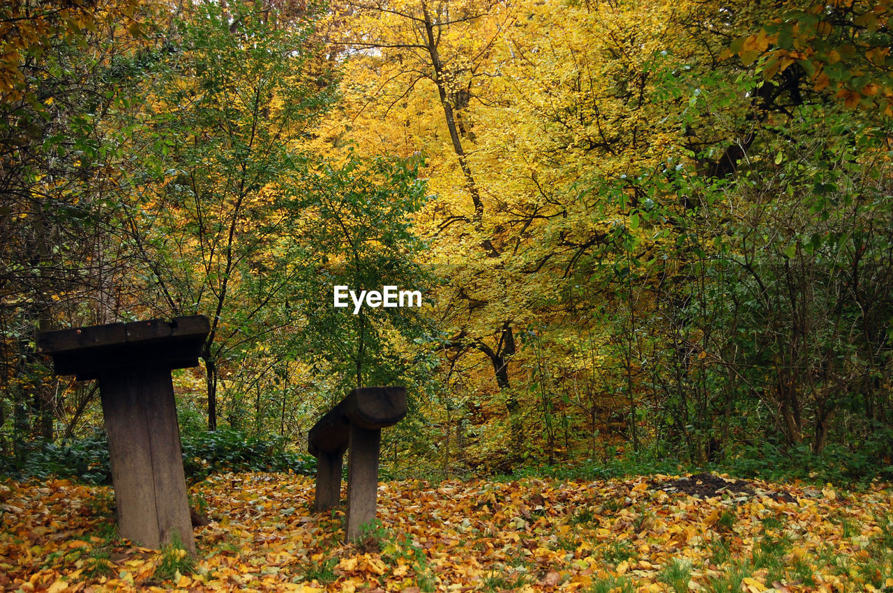 Empty Bench And Table Against Autumn Trees In Forest