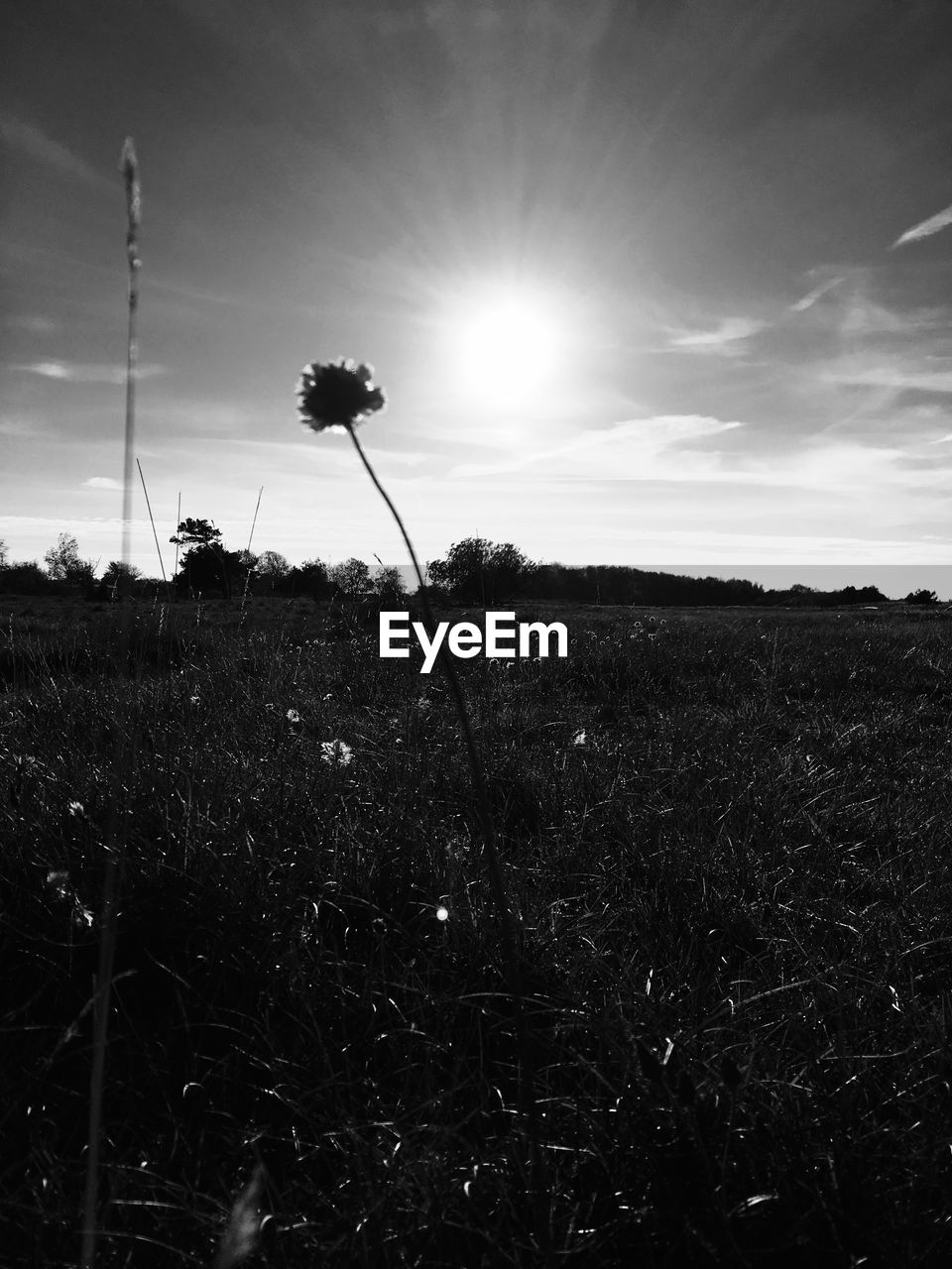 field, nature, growth, grass, sun, plant, outdoors, no people, tranquility, beauty in nature, sky, flower, landscape, sunset, day, fragility, freshness, close-up