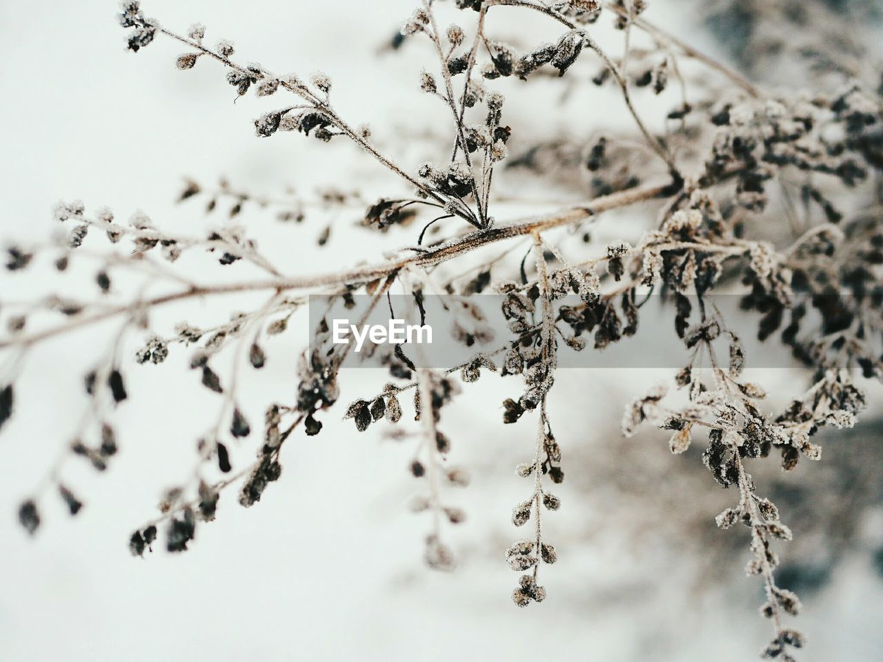 nature, no people, outdoors, beauty in nature, day, dried plant, close-up
