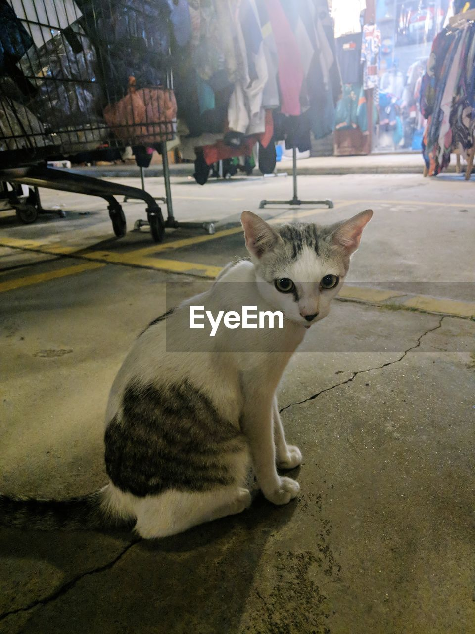 cat, mammal, pets, domestic, animal themes, domestic cat, domestic animals, animal, feline, one animal, vertebrate, street, incidental people, city, footpath, relaxation, portrait, sitting, looking at camera, day, whisker