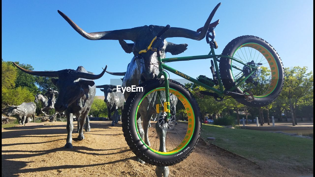 bicycle, transportation, day, mode of transport, land vehicle, outdoors, stationary, no people, sunlight, clear sky, bicycle rack, domestic animals, mammal, animal themes, tire, nature, sky, tree