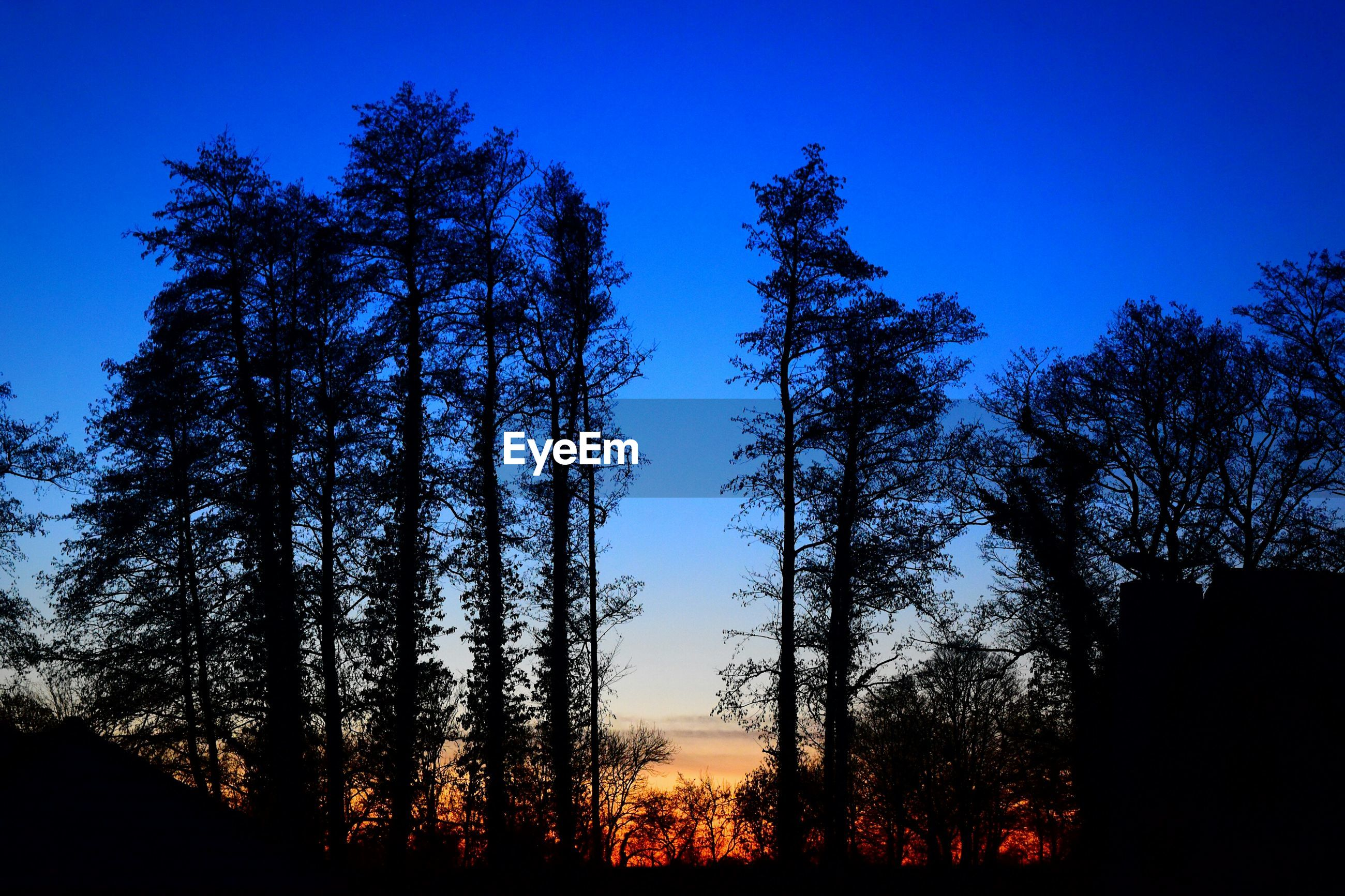 Low angle view of silhouette trees against clear sky