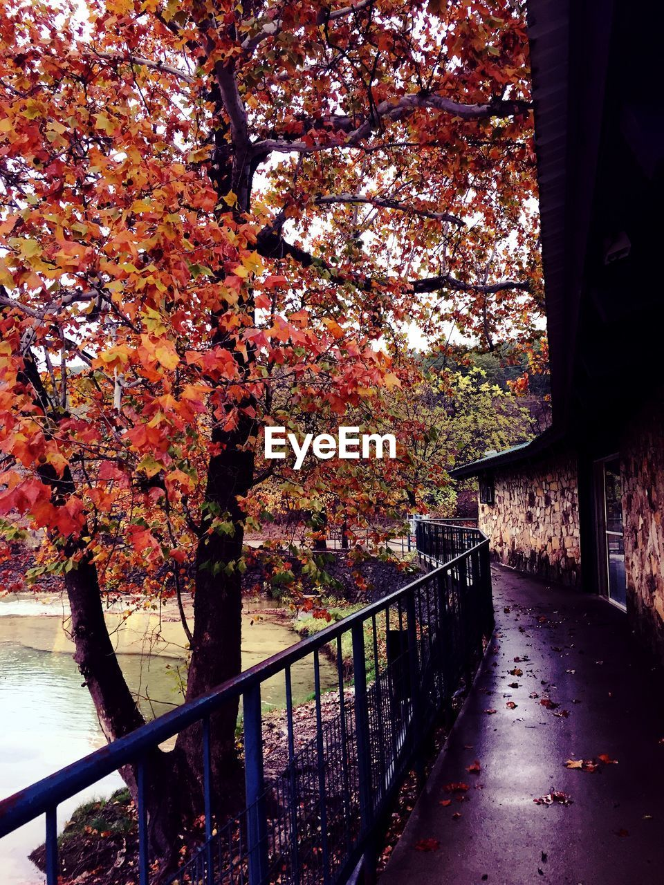autumn, tree, change, railing, leaf, nature, beauty in nature, growth, no people, day, branch, outdoors, footbridge, architecture, sky