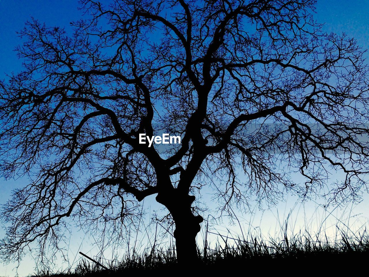tree, bare tree, silhouette, sky, outdoors, nature, beauty in nature, tranquility, no people, scenics, blue, low angle view, branch, day, landscape, clear sky