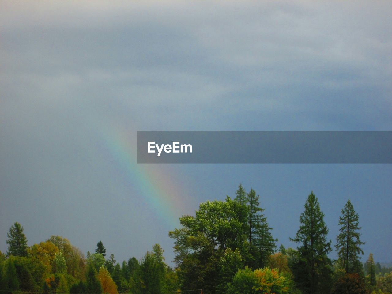 rainbow, tree, double rainbow, nature, beauty in nature, tranquility, no people, scenics, tranquil scene, day, outdoors, growth, multi colored, sky