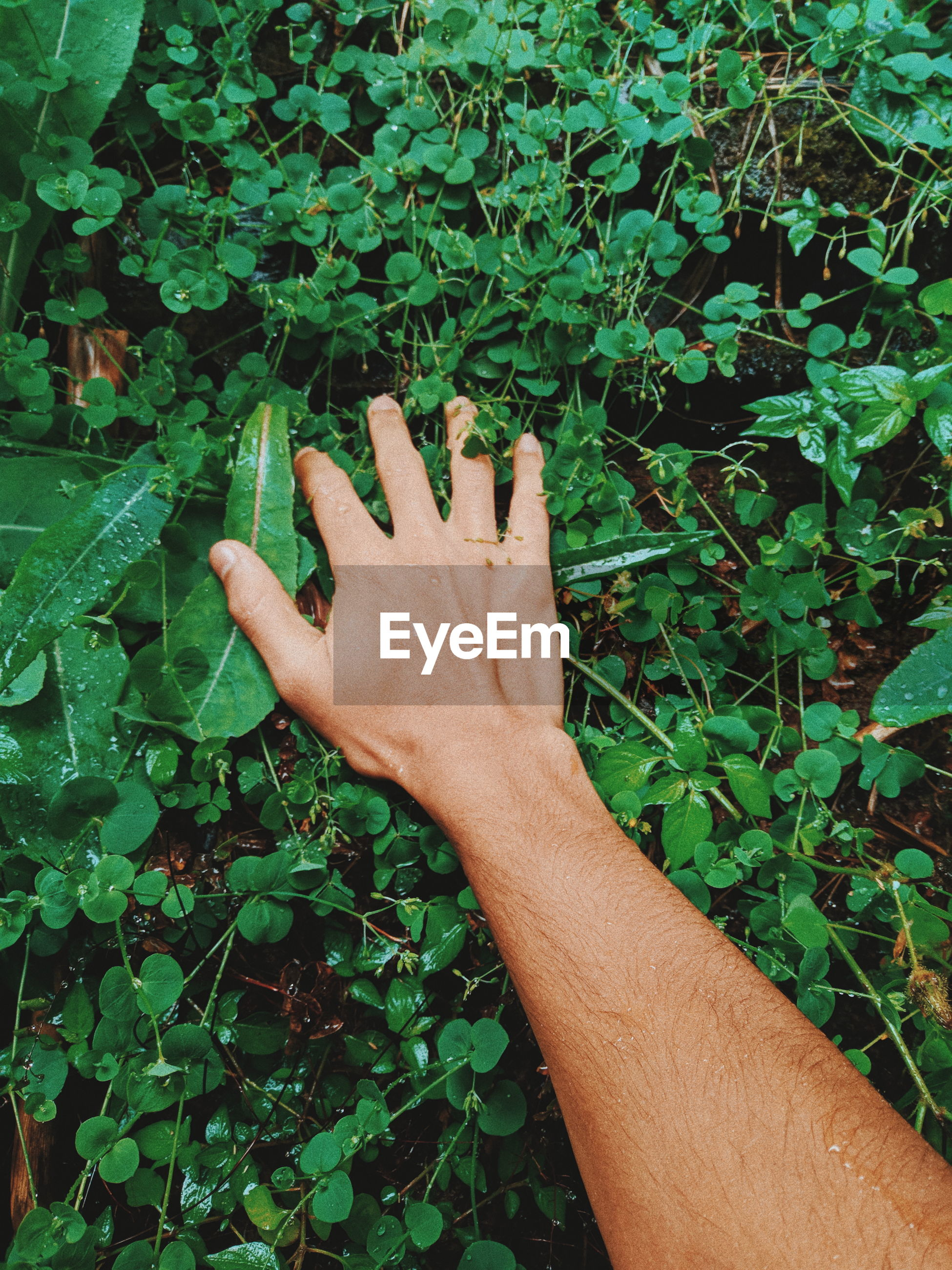CROPPED IMAGE OF HAND TOUCHING PLANT