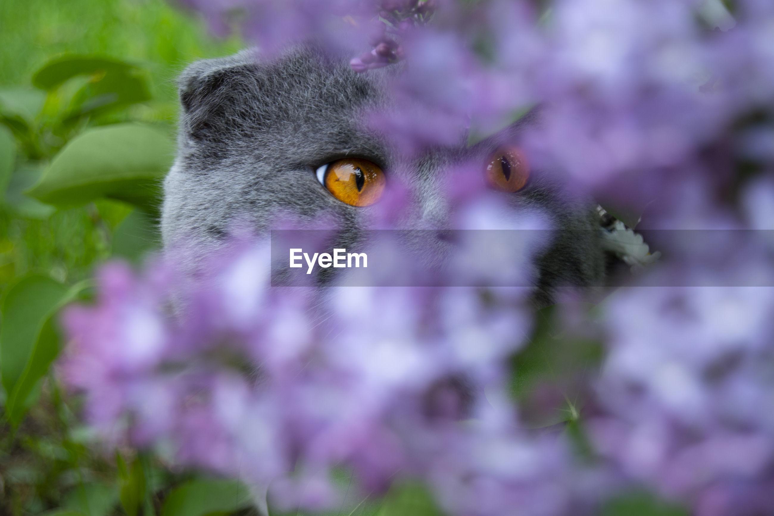Close-up of cat on purple flower
