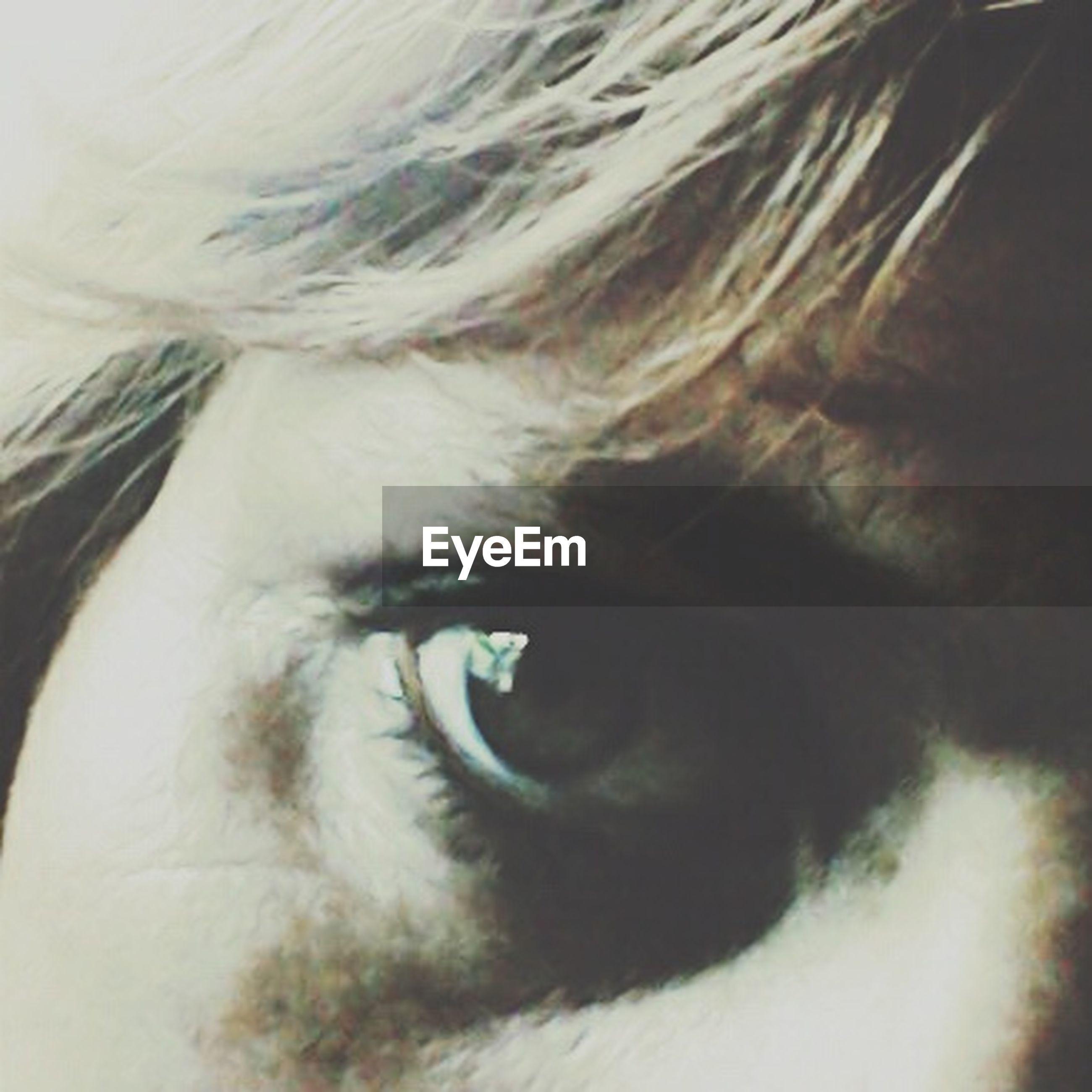 indoors, close-up, human eye, looking at camera, portrait, part of, pets, domestic animals, eyelash, one animal, eyesight, animal body part, animal head, headshot, staring, sensory perception, animal eye