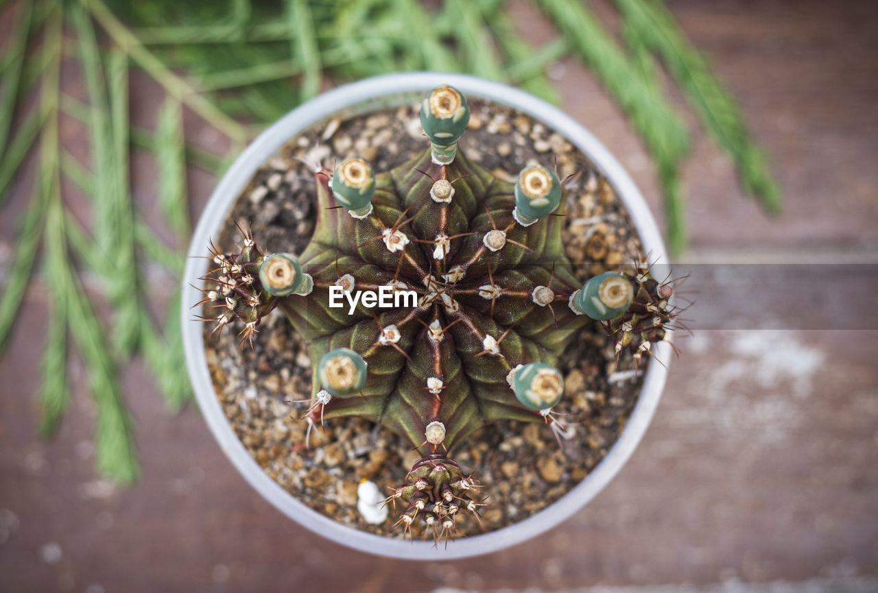 HIGH ANGLE VIEW OF SMALL POTTED PLANT ON METAL