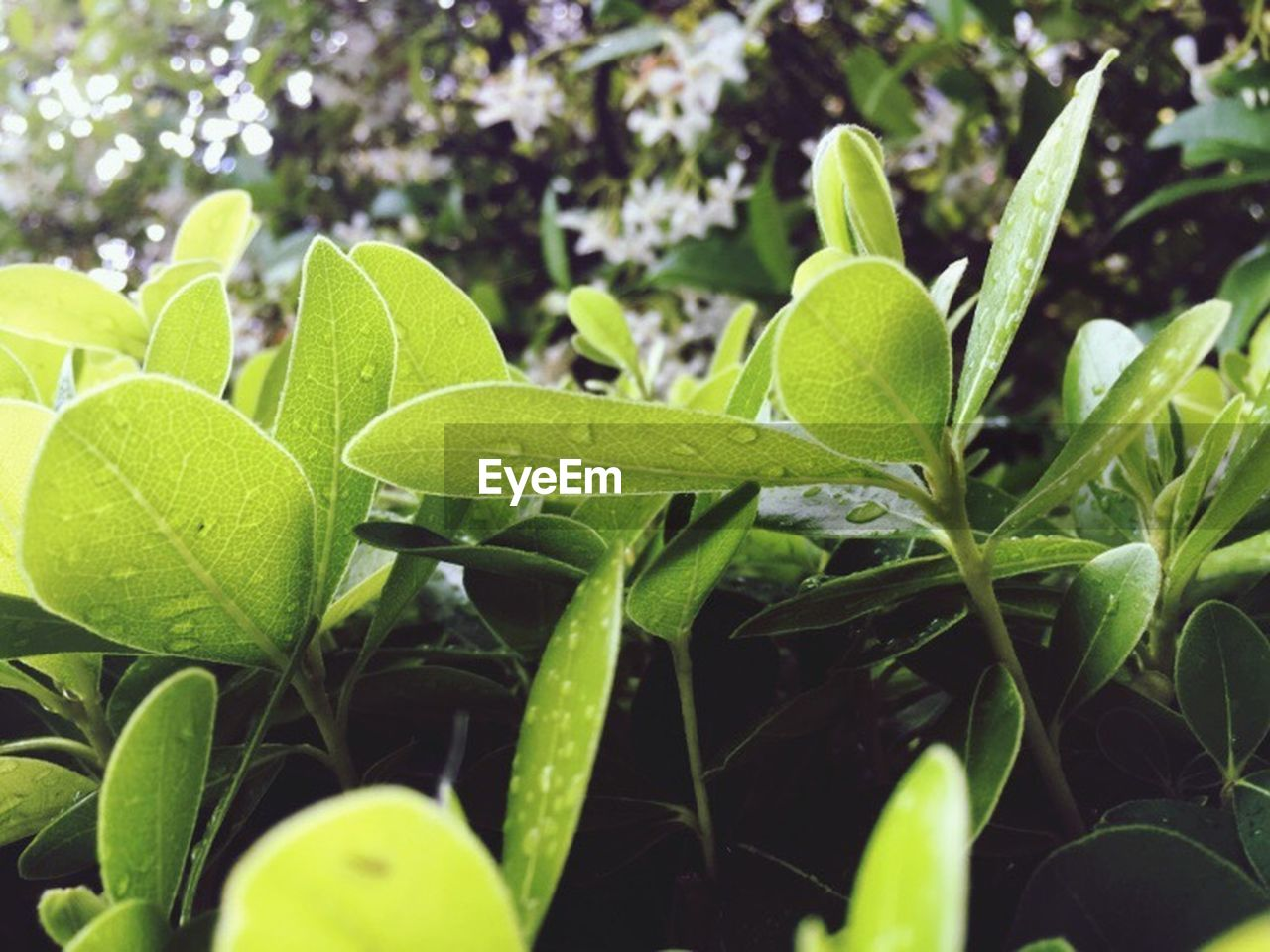 leaf, plant, green color, growth, nature, close-up, no people, day, outdoors, freshness, beauty in nature, fragility