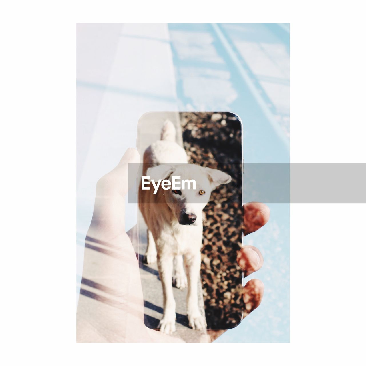 pets, one animal, domestic, mammal, canine, dog, domestic animals, auto post production filter, transfer print, vertebrate, indoors, no people, standing, day, portrait, looking, animal body part, digital composite