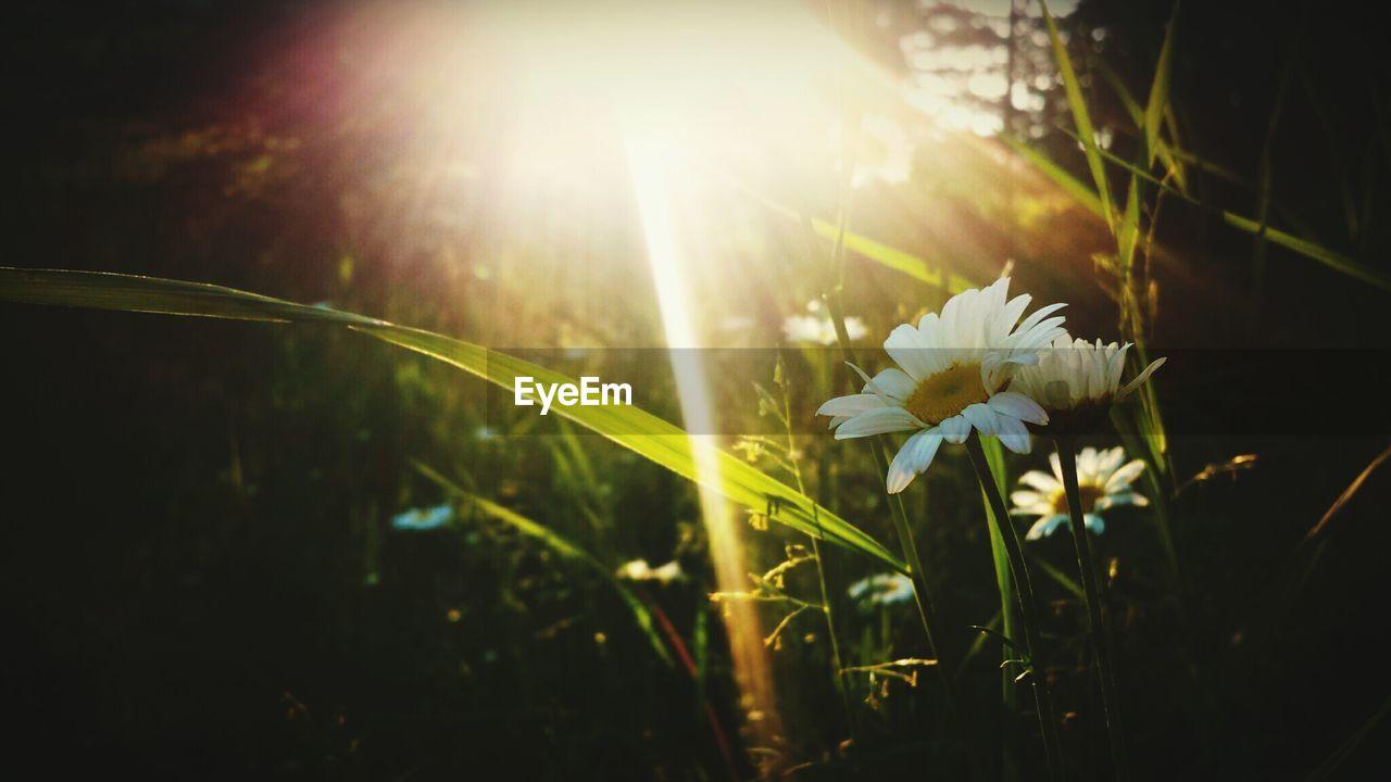 Wildflowers in sunlight