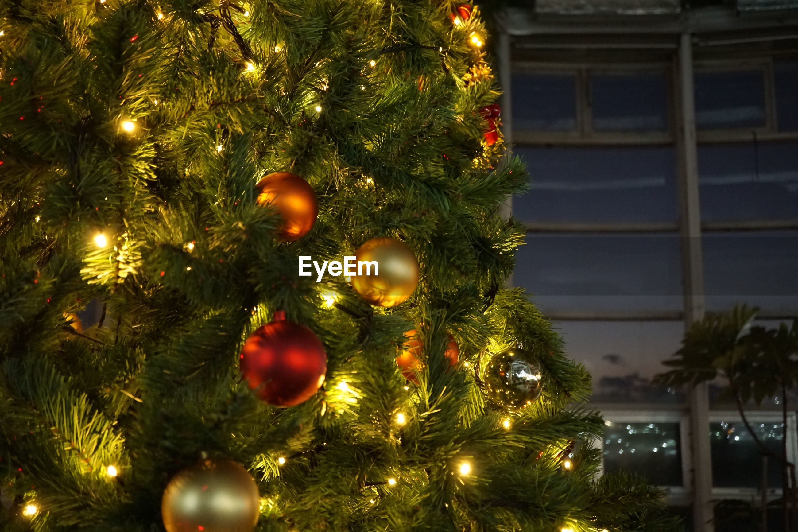 christmas, tree, christmas tree, decoration, celebration, christmas decoration, holiday, illuminated, christmas ornament, christmas lights, no people, holiday - event, green color, hanging, celebration event, plant, night, focus on foreground, close-up, light