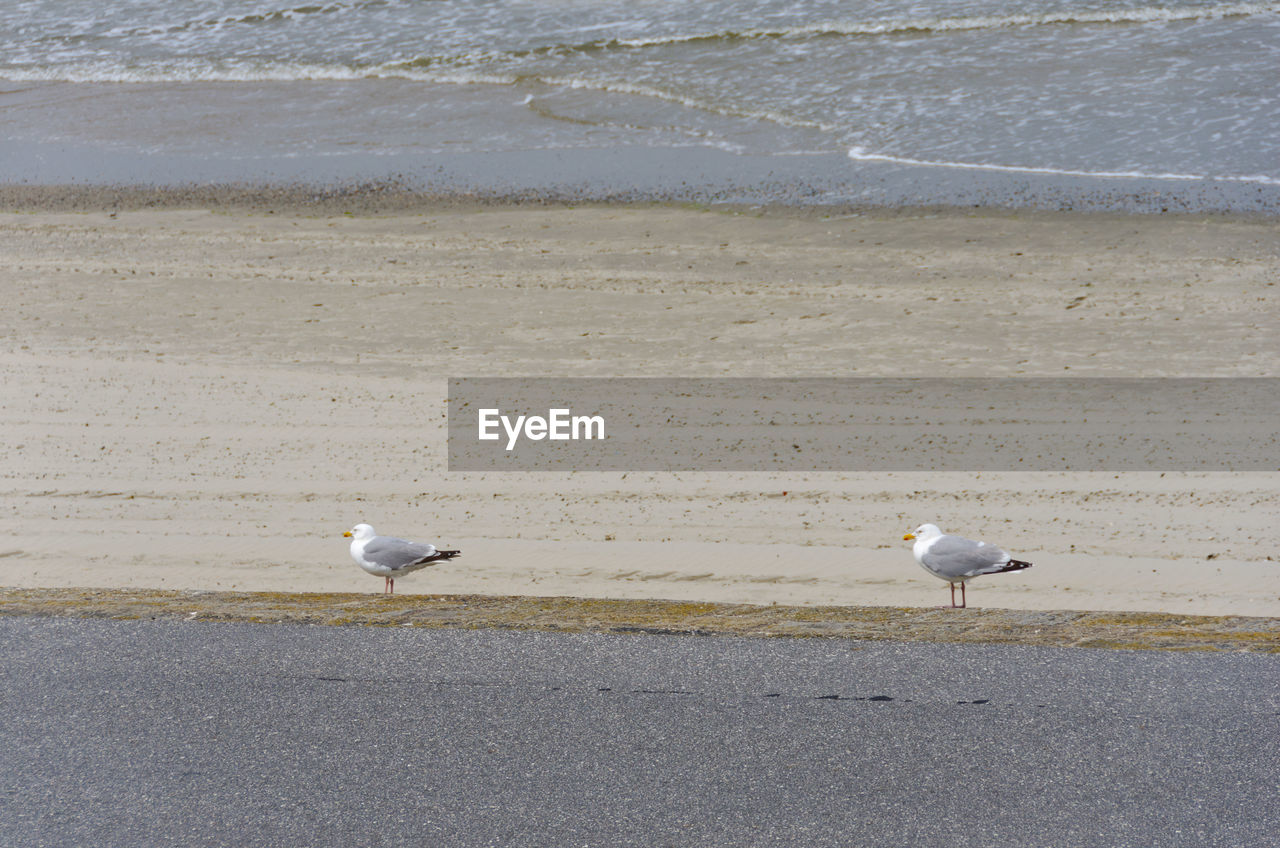 bird, vertebrate, animal, animal themes, water, animals in the wild, beach, land, sea, animal wildlife, group of animals, seagull, day, perching, sand, no people, nature, two animals, white color, outdoors