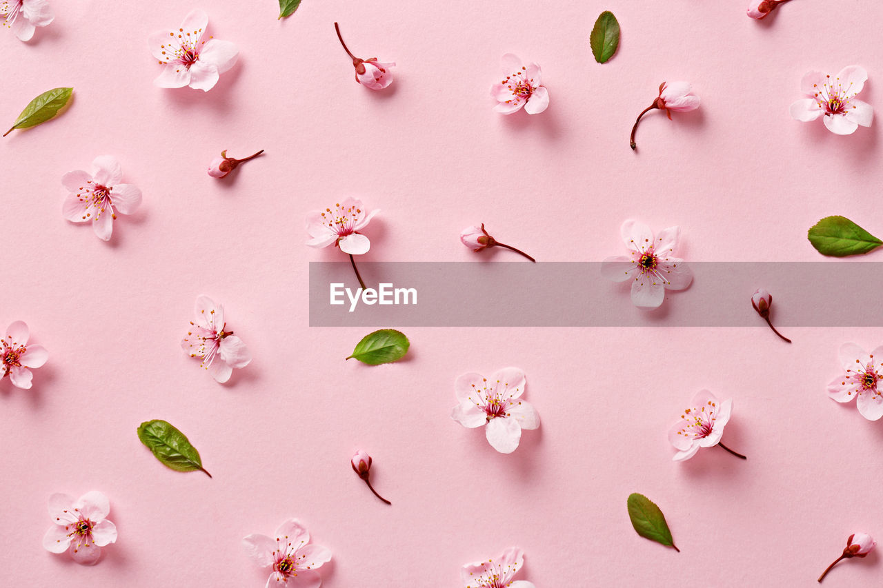 Full frame shot of cherry blossoms and leaves on pink background