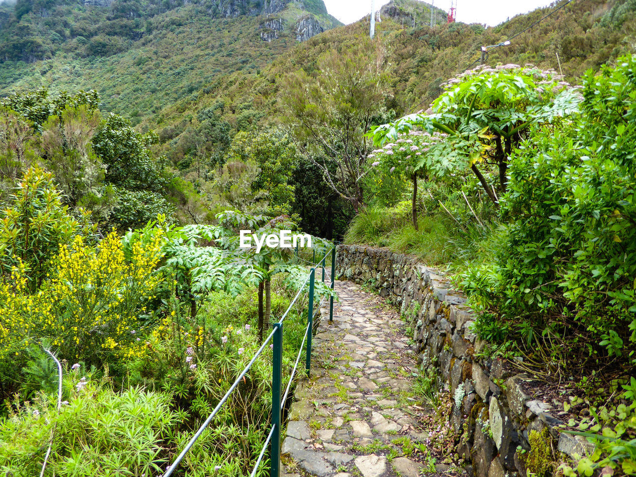 plant, green color, growth, direction, tree, the way forward, beauty in nature, nature, tranquility, tranquil scene, day, footpath, mountain, scenics - nature, no people, landscape, land, environment, outdoors, architecture