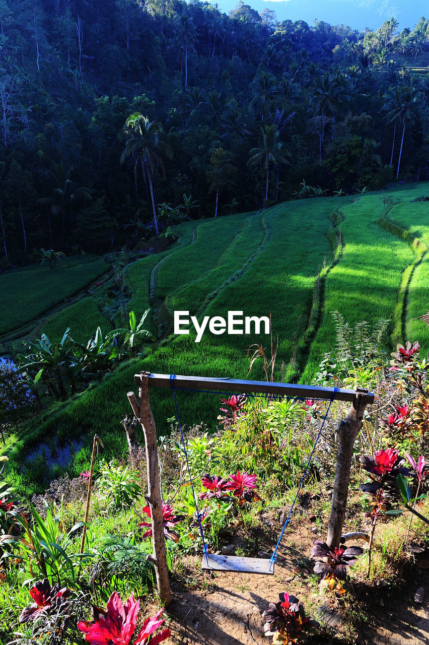 plant, growth, beauty in nature, tree, tranquility, nature, land, tranquil scene, day, green color, landscape, no people, flowering plant, flower, scenics - nature, field, environment, outdoors, high angle view, grass