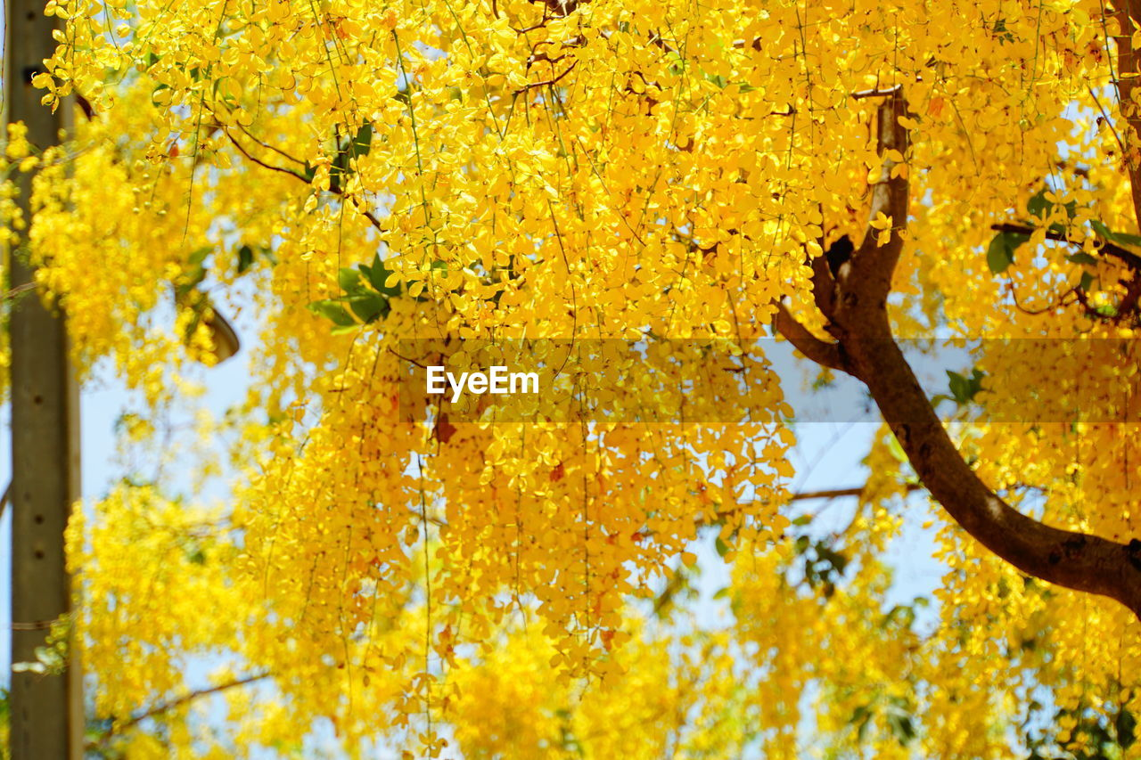 yellow, plant, tree, flower, beauty in nature, flowering plant, growth, day, trunk, close-up, tree trunk, no people, focus on foreground, nature, branch, vulnerability, fragility, freshness, outdoors, low angle view, change, lichen