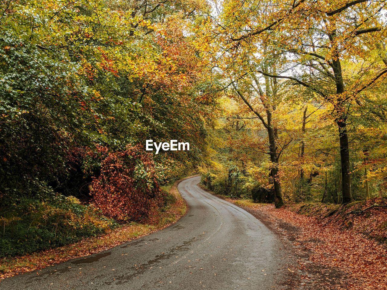 ROAD AMIDST TREES SEEN THROUGH AUTUMN LEAVES
