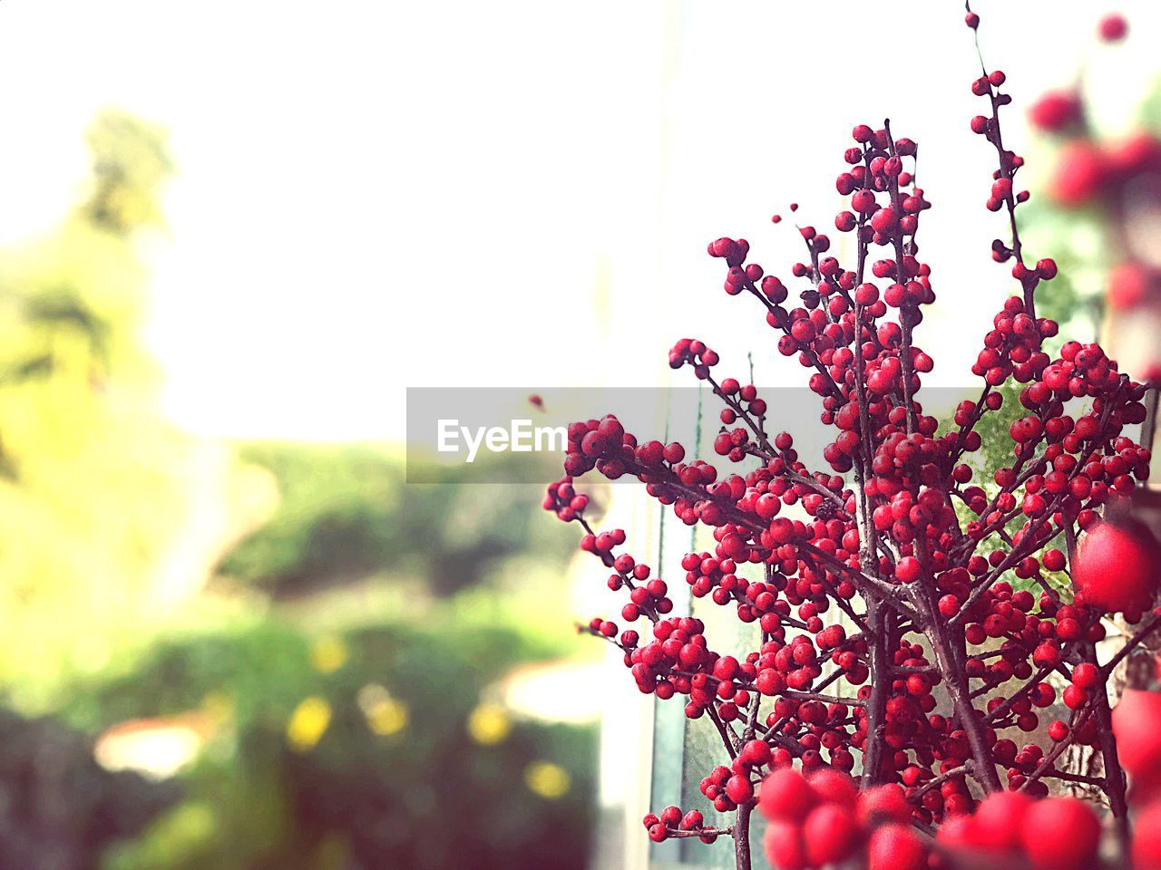 fruit, growth, nature, red, tree, beauty in nature, focus on foreground, plant, day, outdoors, freshness, no people, close-up, flower, food, fragility