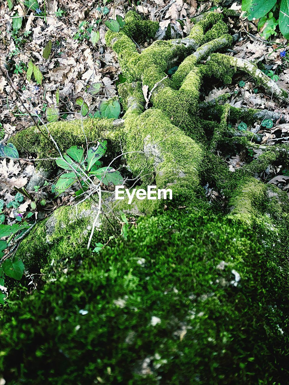 plant, green color, growth, land, day, tranquility, nature, no people, beauty in nature, tree, forest, grass, field, moss, outdoors, high angle view, tranquil scene, selective focus, scenics - nature, lush foliage