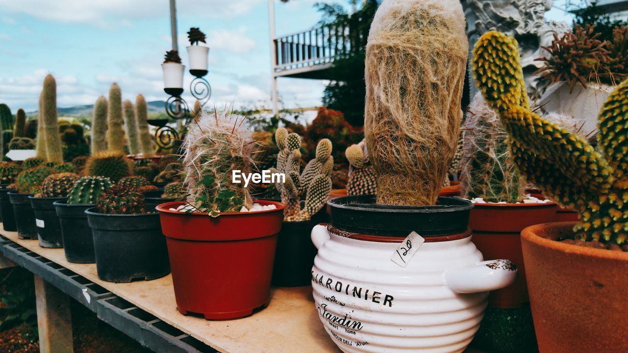 Close-up of potted plants for sale