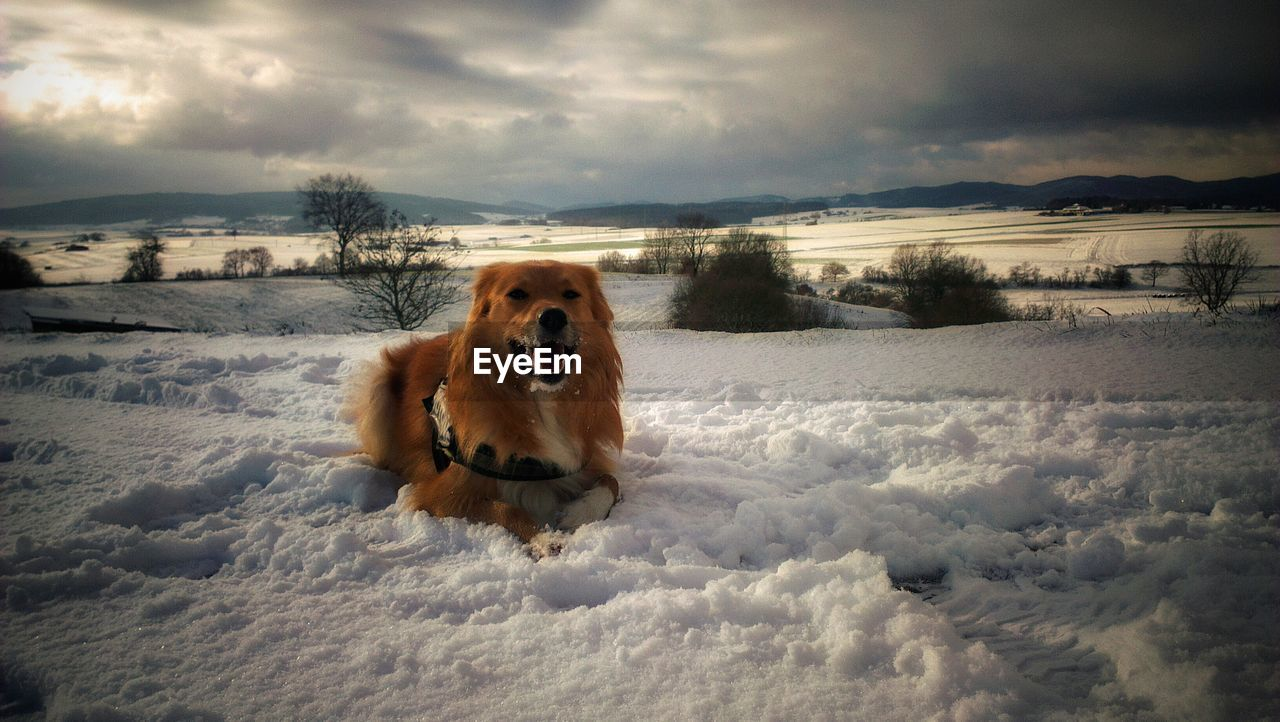 snow, winter, one animal, cold temperature, dog, mammal, canine, domestic, pets, domestic animals, animal, cloud - sky, animal themes, vertebrate, sky, nature, beauty in nature, field, scenics - nature, no people, outdoors