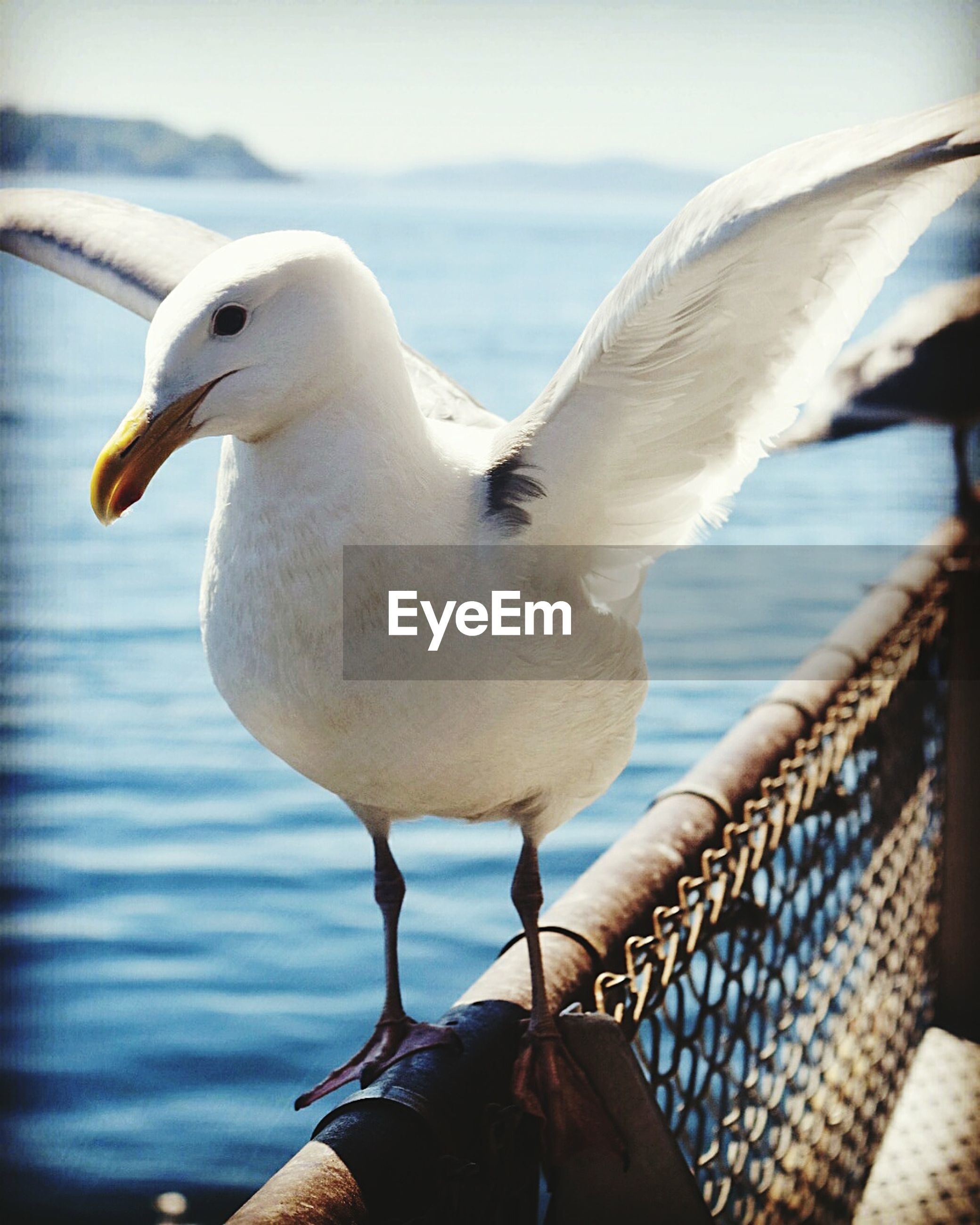animal themes, bird, animals in the wild, seagull, wildlife, one animal, beak, focus on foreground, close-up, water, nature, perching, pelican, outdoors, animal head, white color, day, side view, sea, no people