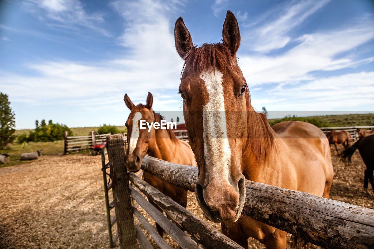 Horses By Fence On Field Against Sky