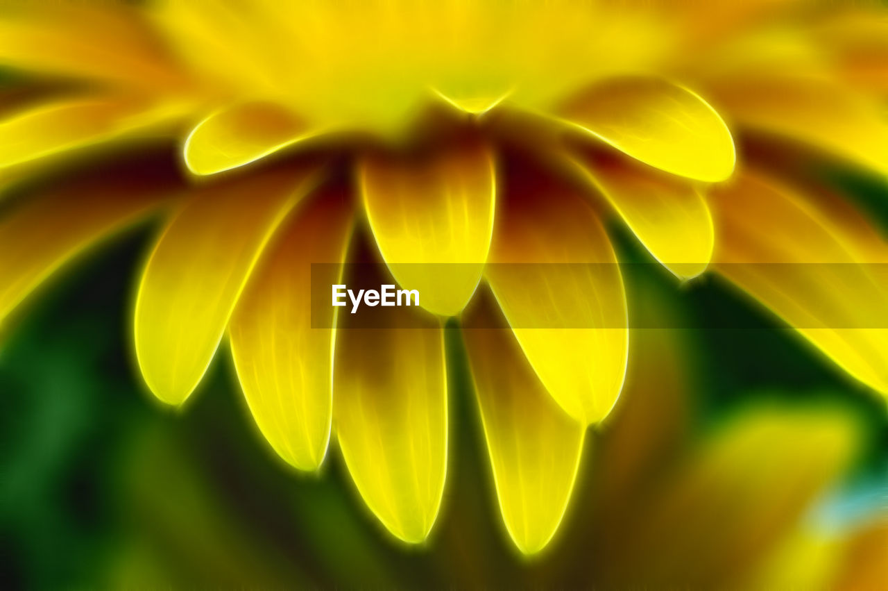 flower, flowering plant, close-up, petal, vulnerability, plant, beauty in nature, fragility, yellow, freshness, no people, growth, flower head, nature, selective focus, inflorescence, day, focus on foreground, outdoors, sunlight