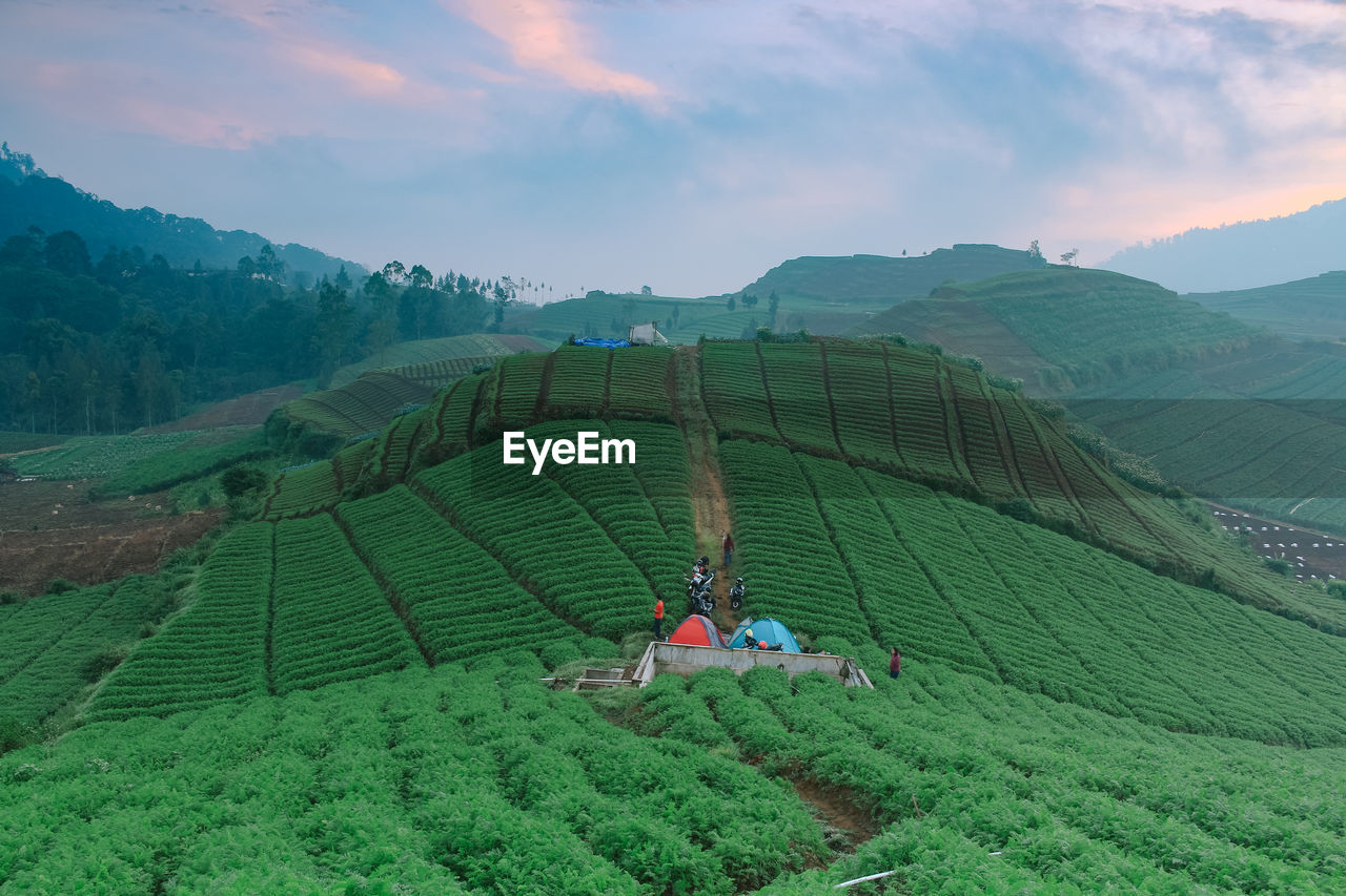 SCENIC VIEW OF AGRICULTURAL LANDSCAPE