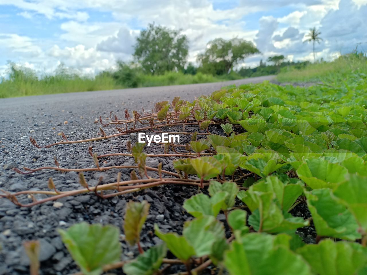 plant, nature, leaf, growth, plant part, green color, selective focus, day, no people, tranquility, land, close-up, field, cloud - sky, beauty in nature, outdoors, surface level, tranquil scene, sky, non-urban scene, leaves