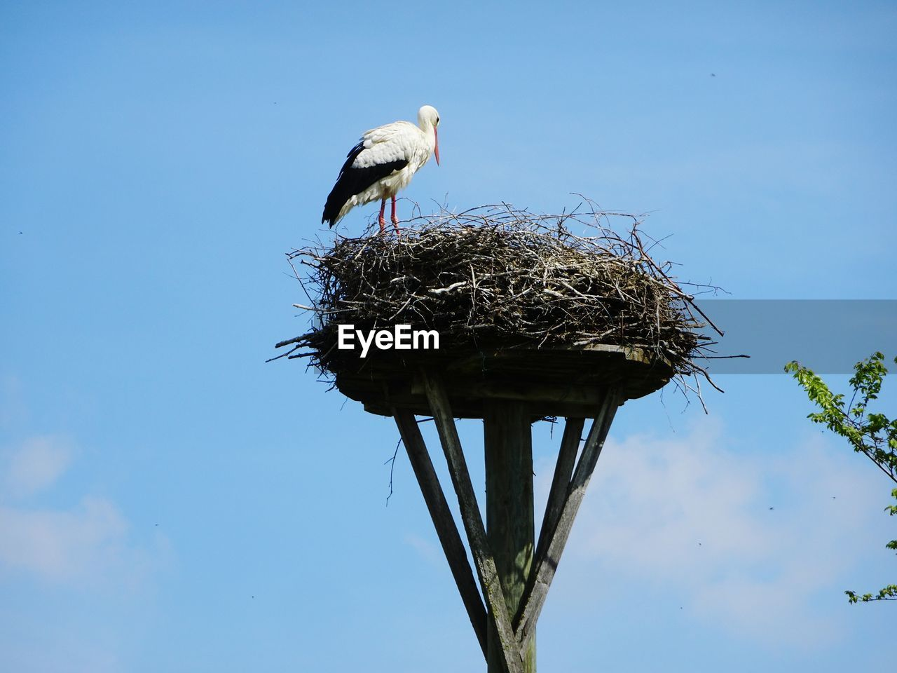 bird, animal themes, animals in the wild, vertebrate, animal, animal wildlife, animal nest, one animal, sky, stork, nature, day, blue, no people, perching, low angle view, clear sky, plant, bird nest, outdoors